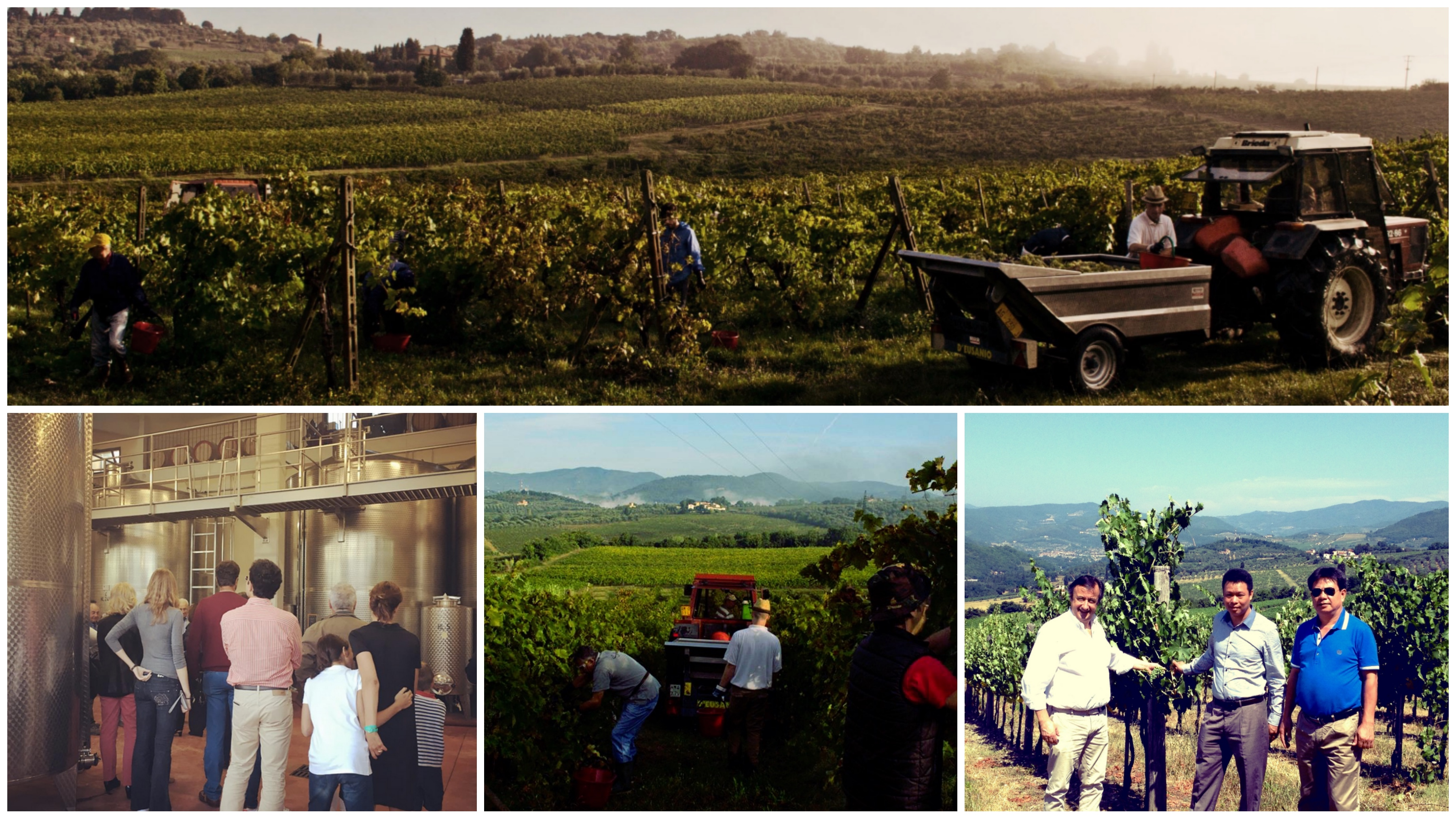 vendemmia 2016 collage visita